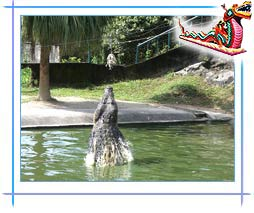 Langkawi Crocodile Farm